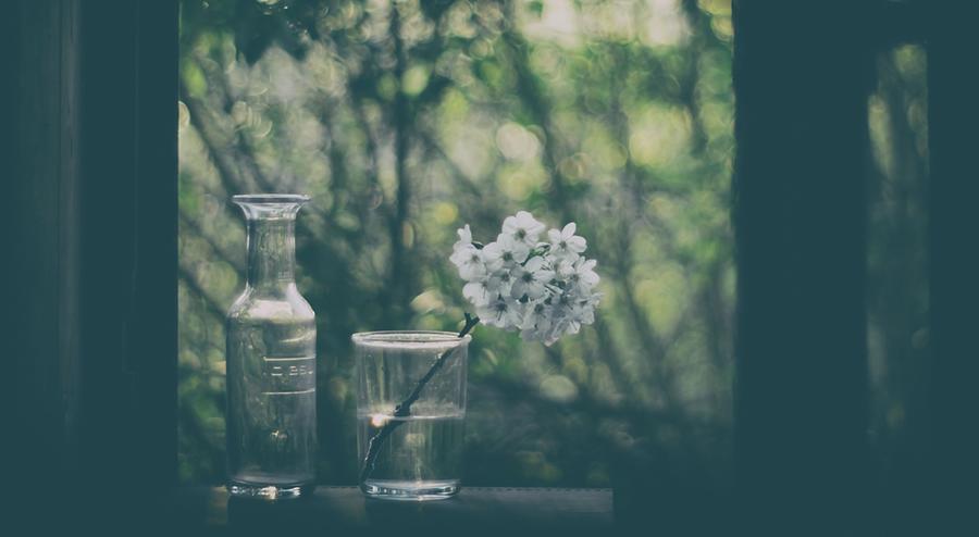 Flower Photograph - Through The Open Window by Delphine Devos