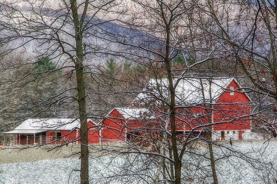 Barn Photograph - Through The Trees by Stephanie Calhoun