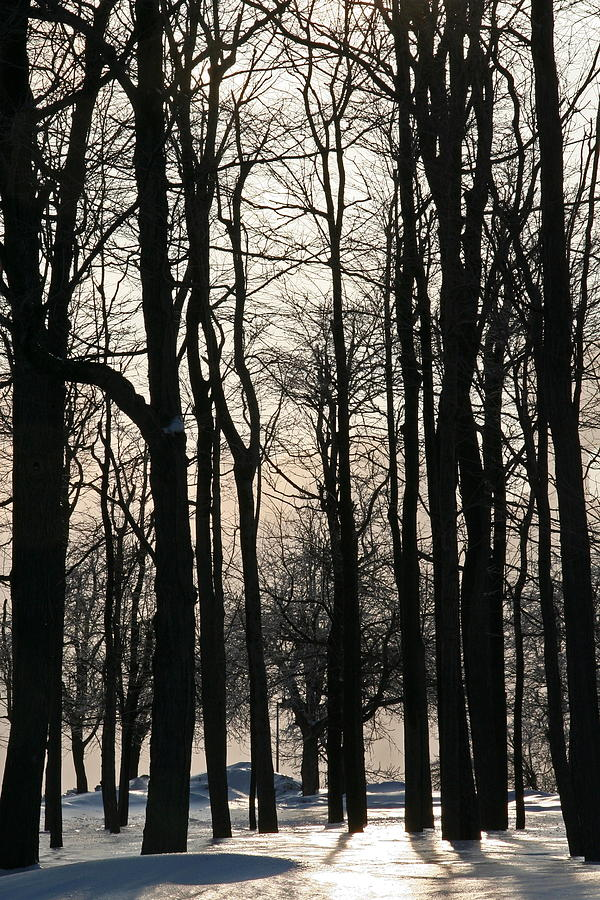 Ny Photograph - Through The Winter Trees by Heather Allen