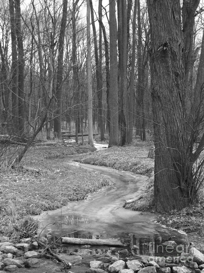 Woods Photograph - Through The Woods by Sara  Raber
