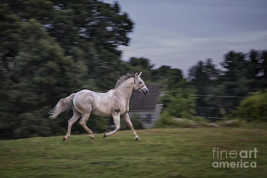Animal Photograph - Thundersoul by Evelina Kremsdorf
