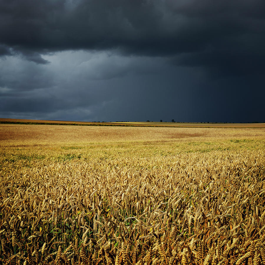 Thunderstorm Clouds Over Wheat Field Photograph by Avtg