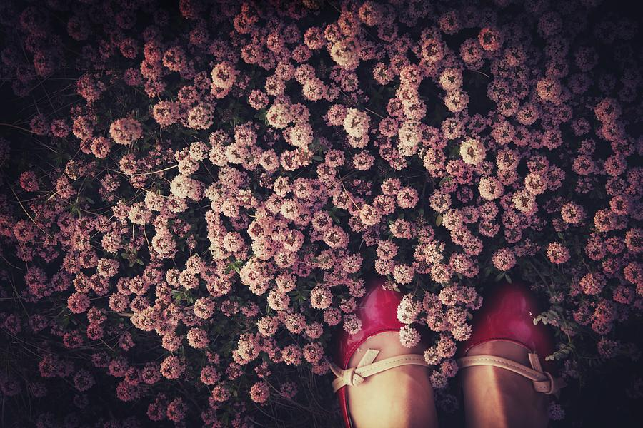 Shoes Photograph - Thyme Carpet by Takako Fukaya