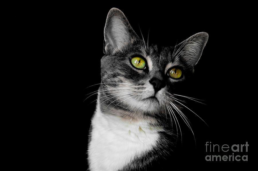 Cat Photograph - Ti Min by Bianca Nadeau
