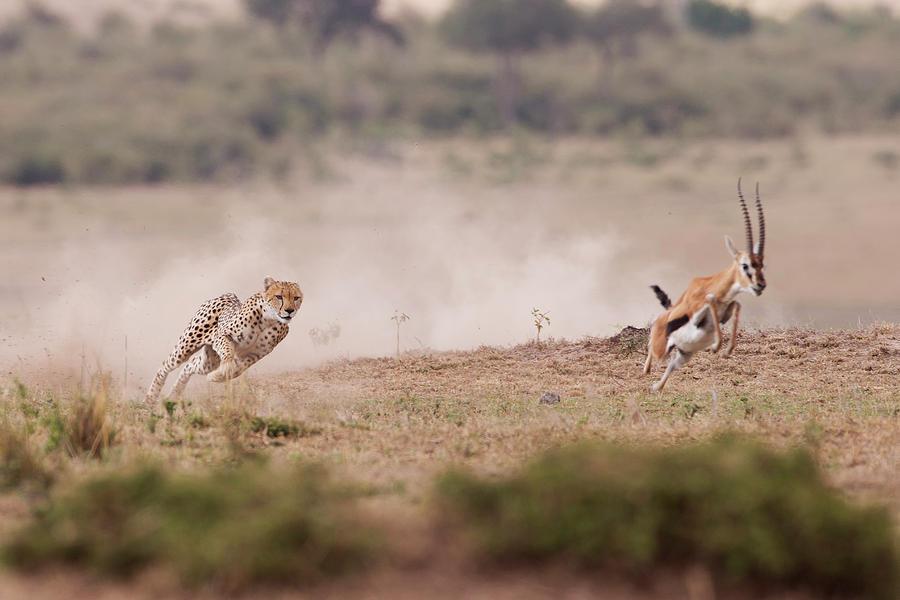 Hunt Photograph - Ti Prendo by Valerio Ferraro