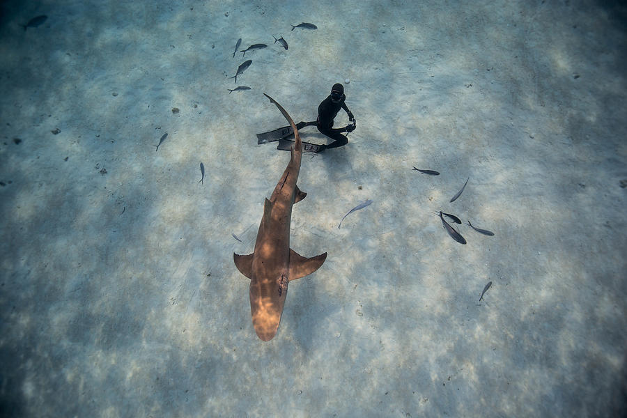 Freediving Photograph - Tiburon Limon by One ocean One breath