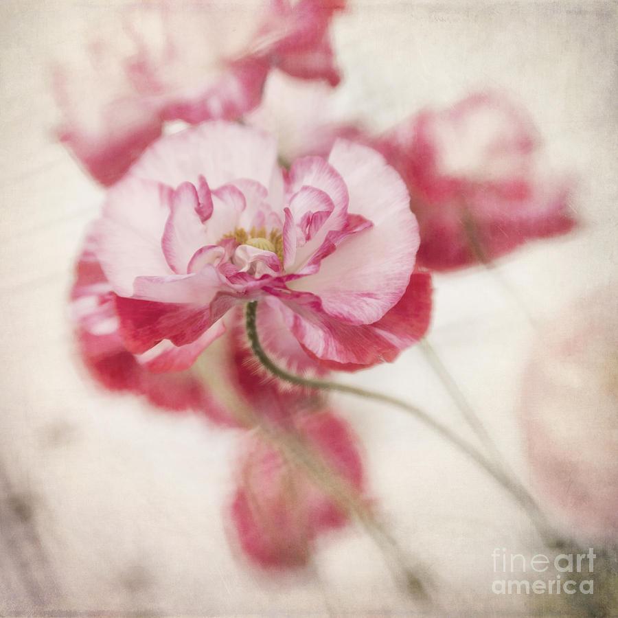Poppy Photograph - Tickle Me Pink by Priska Wettstein