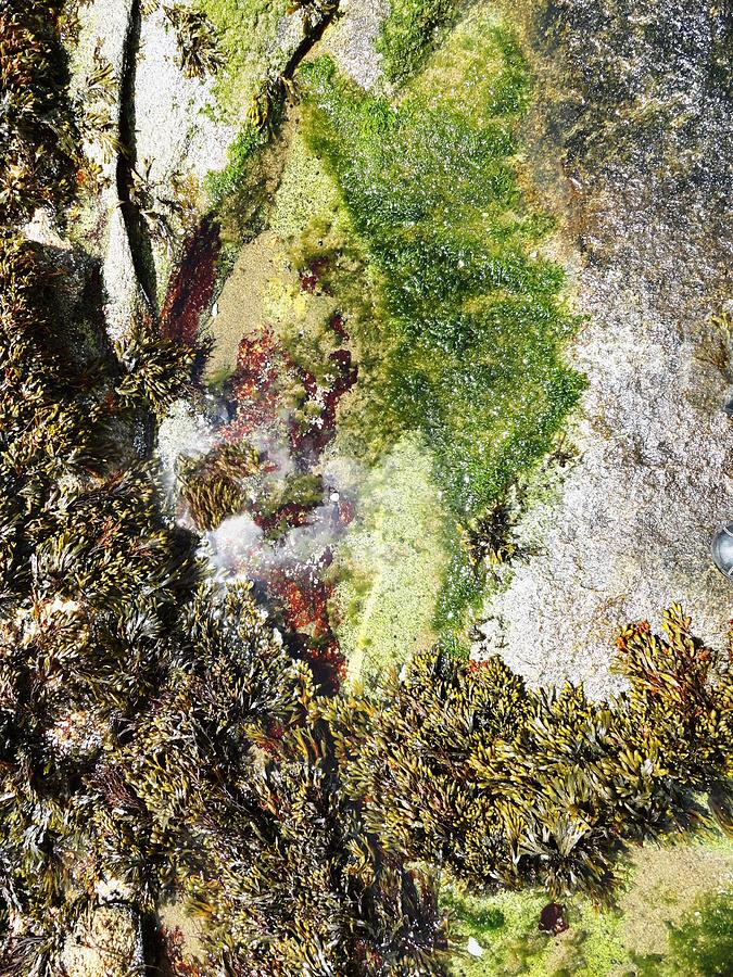 Tide Pool Abstract Photograph