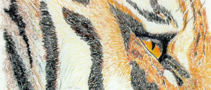 Tiger Amber Drawing