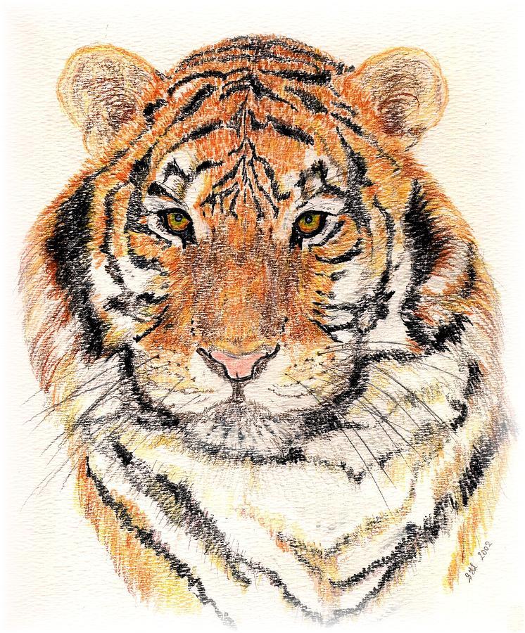 Tiger Bright Drawing
