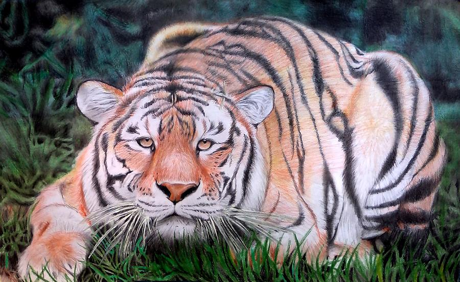 Tiger Drawing Colour Painting By Josue Neftali