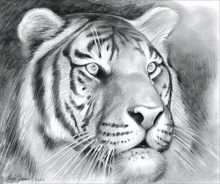 Tiger Drawing By Greg Joens