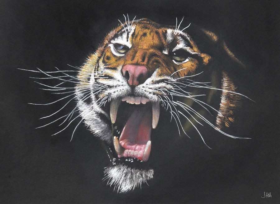 Tiger Growl Drawing By John Hebb