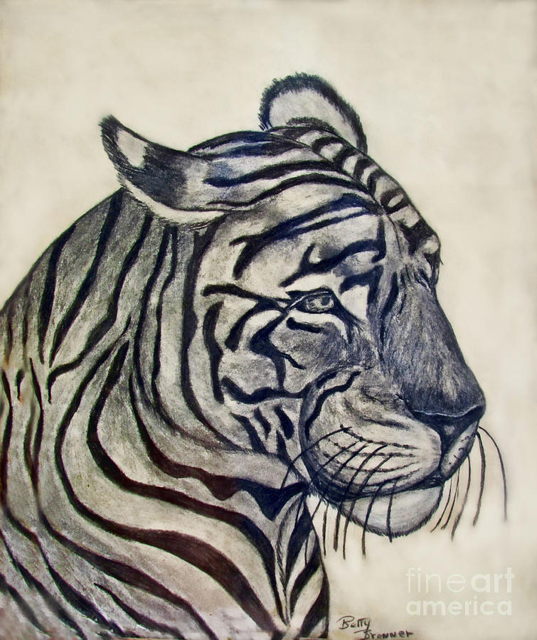Animals Drawing - Tiger II by Debbie Portwood