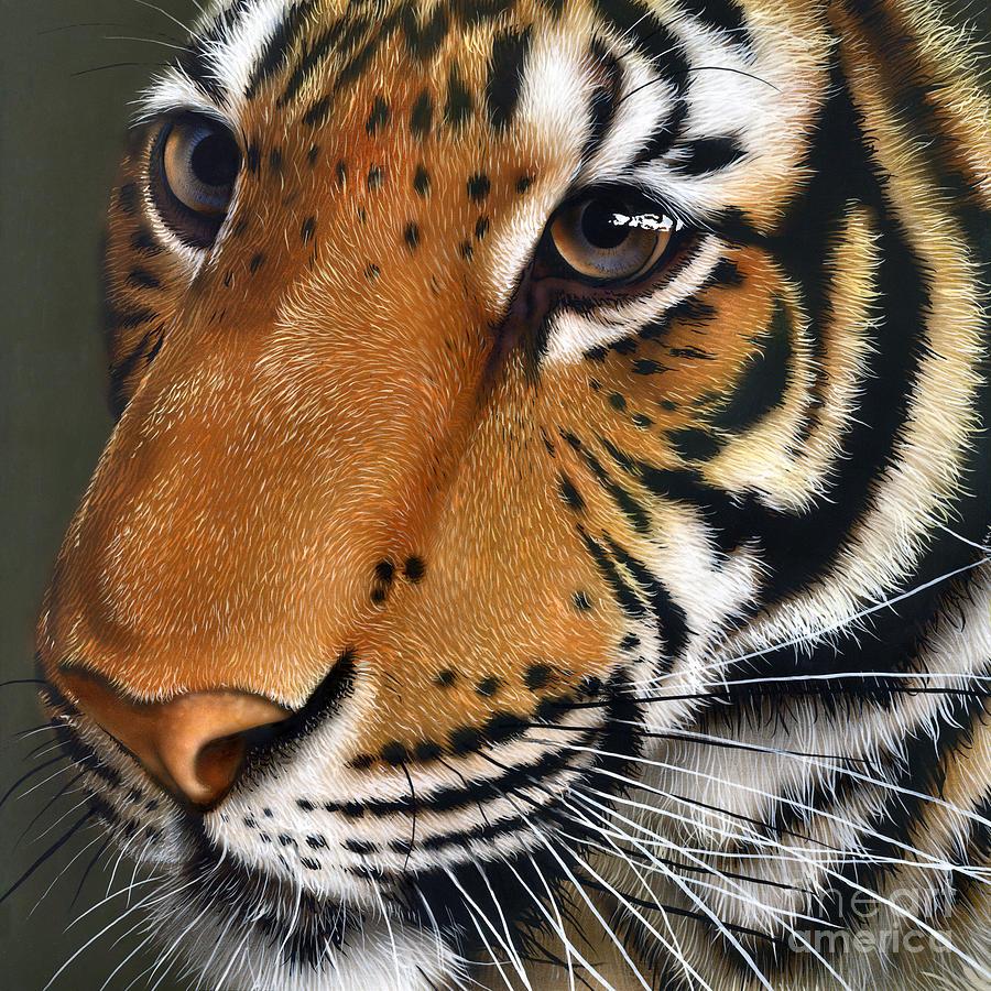 Tiger Painting - Tiger by Jurek Zamoyski