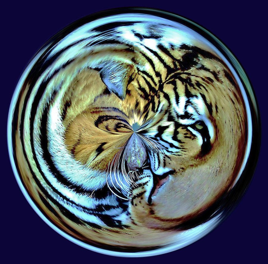 Orb Photograph - Tiger Orb by Paulette Thomas