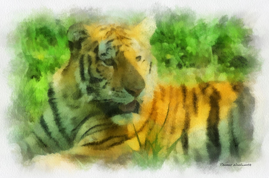 Feline Photograph - Tiger Resting Photo Art 01 by Thomas Woolworth