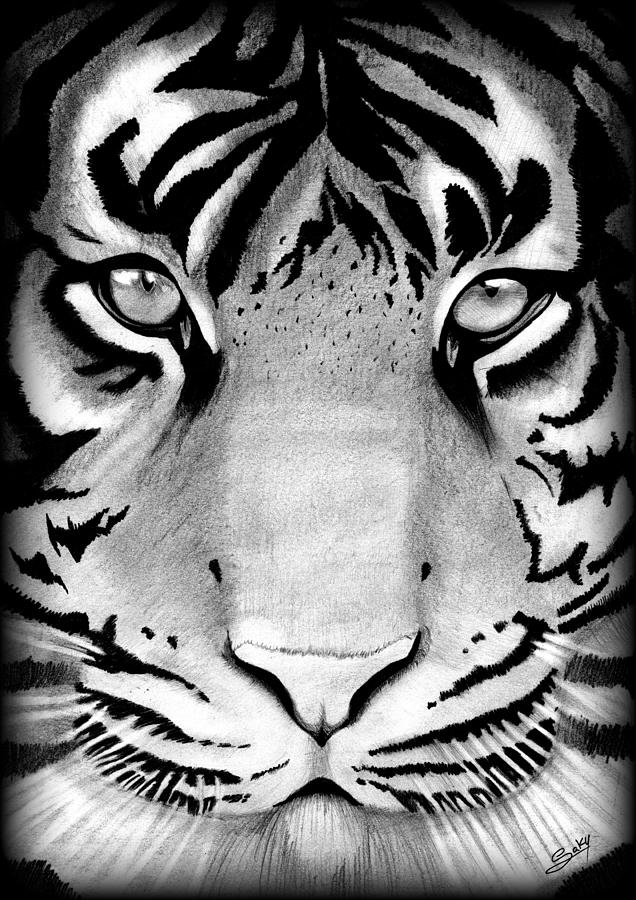 Tiger Painting - Tiger by Saki Art