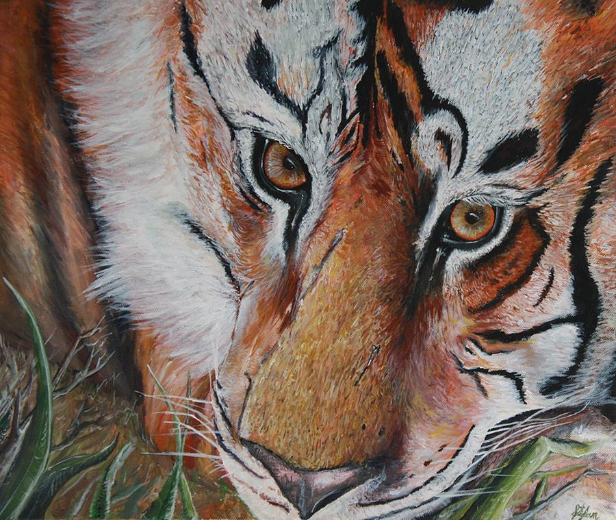 Tiger by Stefan Kaertner