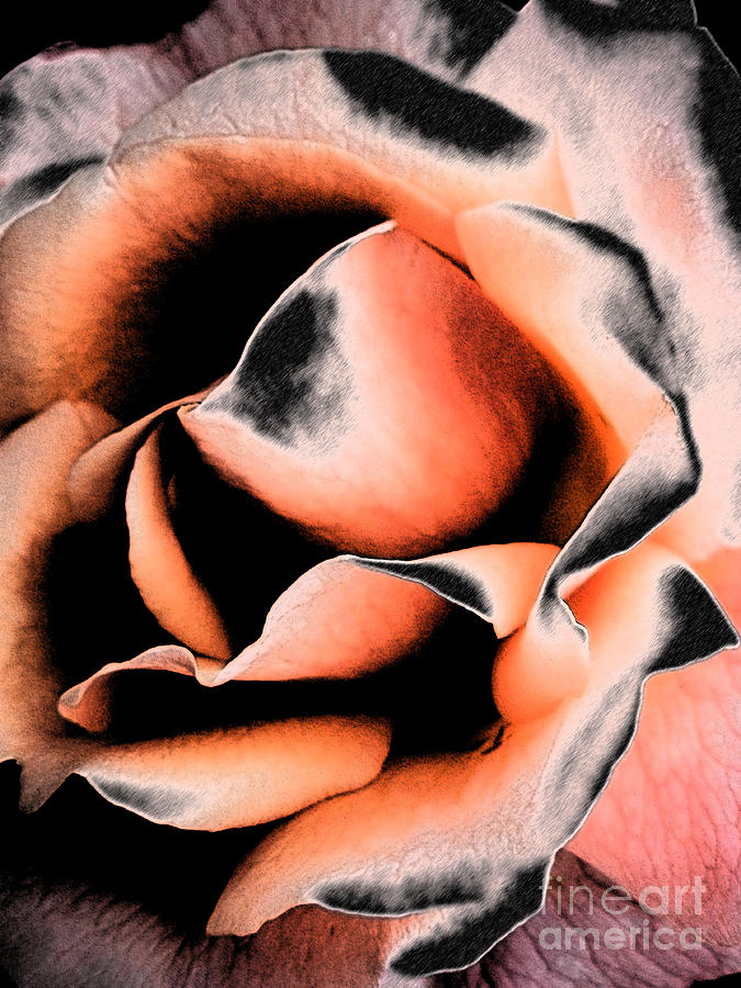 Abstract Photograph - Tigers And Roses by Diane DiMarco