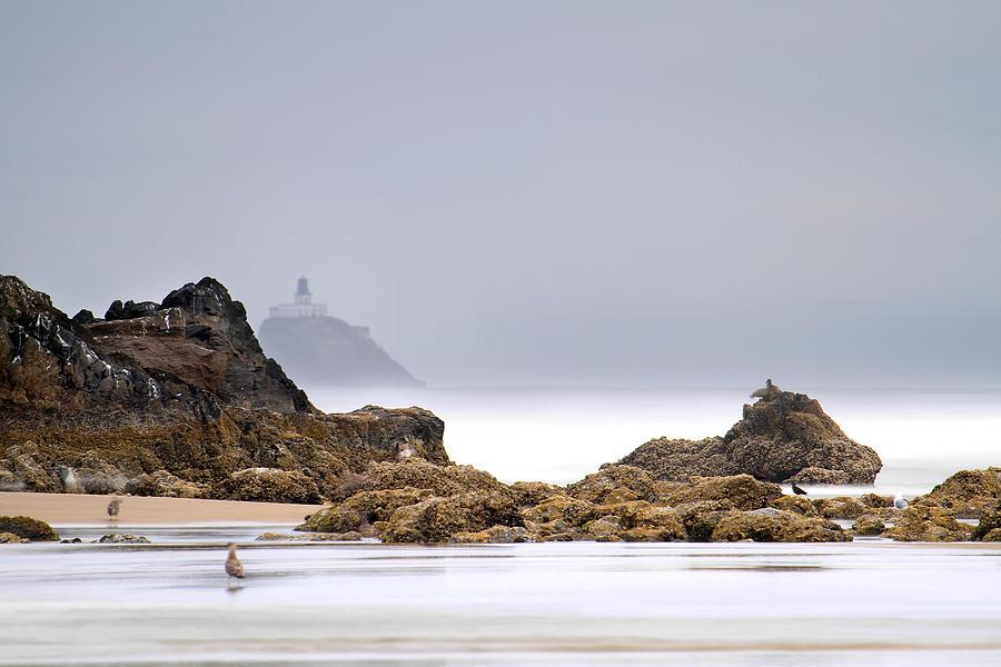 Cannon Beach Photograph - Tillamook Head Lighthouse by David Gn