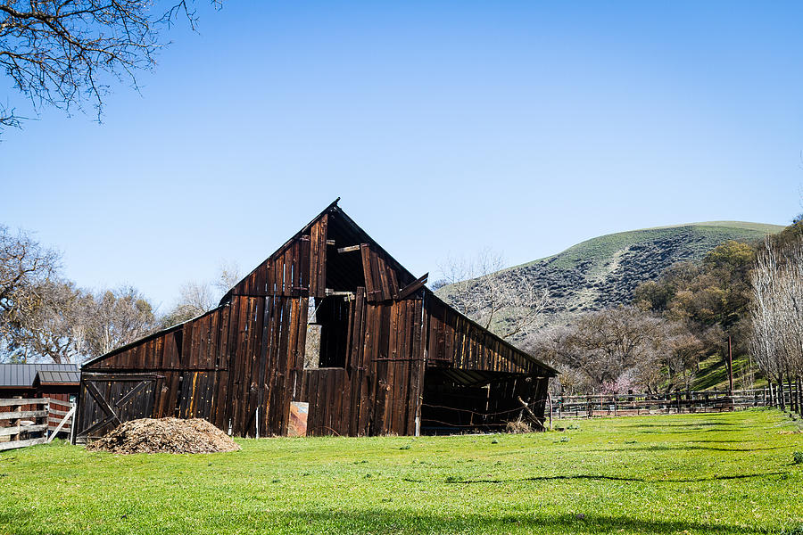 Tilted Old Barn In Meadow by Dina Calvarese