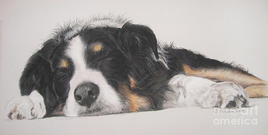 Pastel Pet Portrait Pastel - Tim by Joanne Simpson