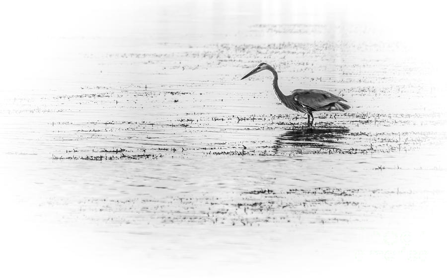 Wading Birds Photograph - Time For Fast Food by Marvin Spates