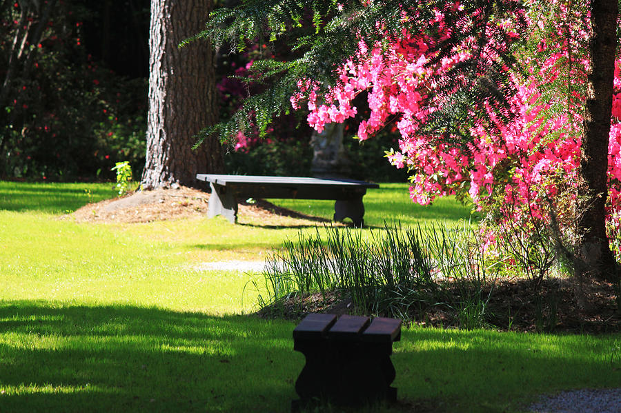 Southern Garden Photograph - Charleston Sc Time Out by Ella Char