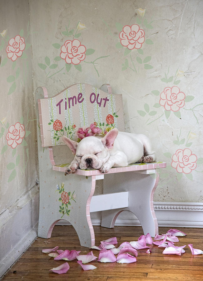 Lisa Jane Painting - Time Out Variant 1 by MGL Meiklejohn Graphics Licensing