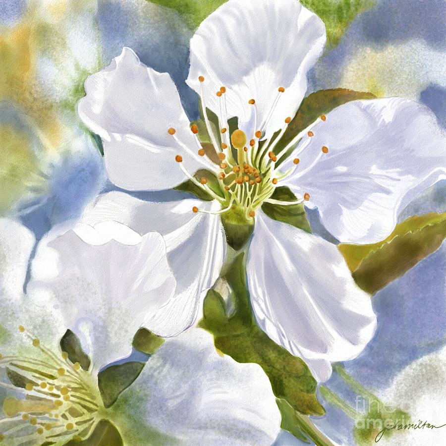 Cherry Blossom Painting - Time To Blossom by Joan A Hamilton