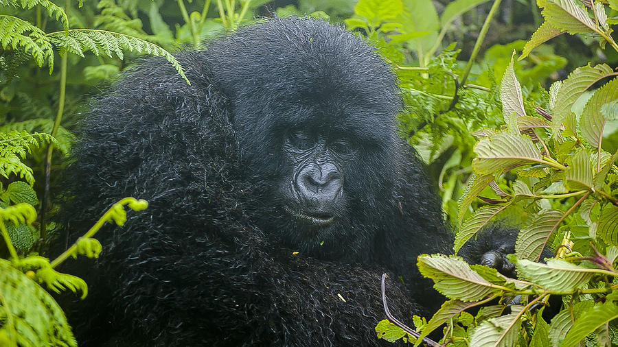Rwanda Photograph - Time To Eat by Paul Weaver