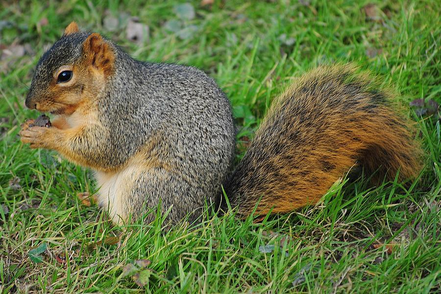 Squirrel Photograph - Time To Feast by Frozen in Time Fine Art Photography
