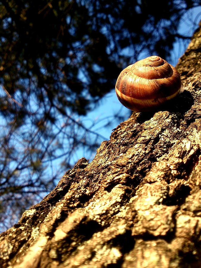Snail Photograph - Time To Wake Up by Lucy D