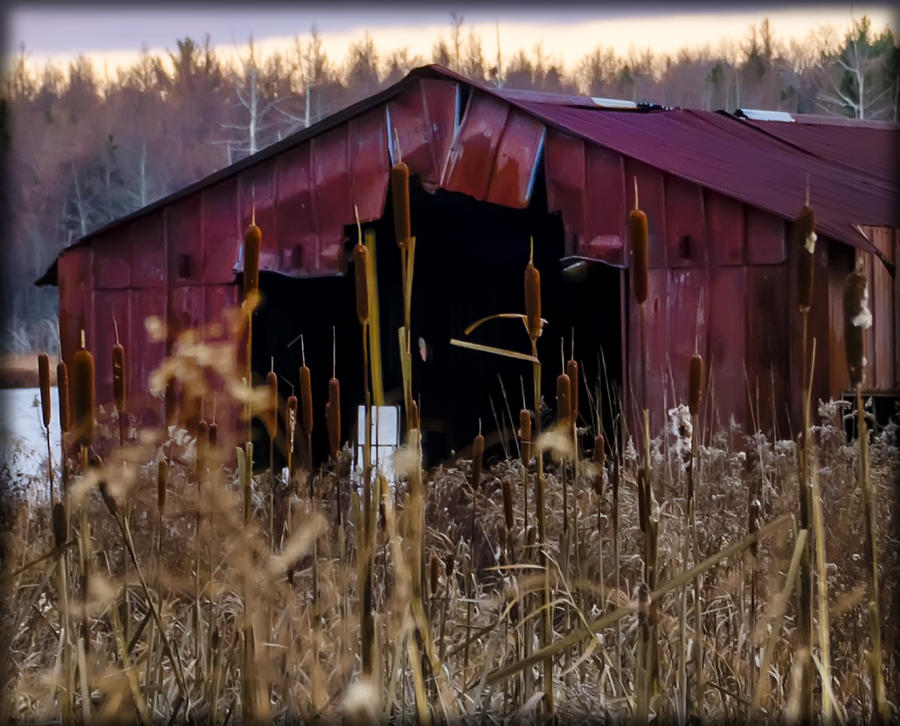 Tin Photograph - Tin Roof Rusted by Bill Cannon