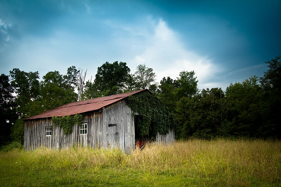 Barn Photograph - Tin Roof...ivy Covered Barn by Shane Holsclaw