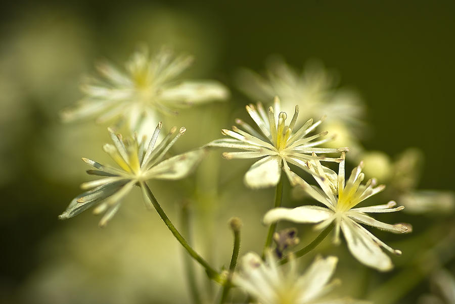 Flower Photograph - Tiny And Delicate by Samantha Eisenhauer