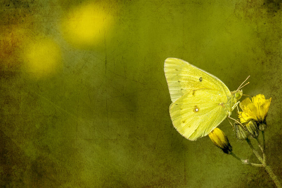 Butterfly Photograph - Tiny Green Dancer by Bill Tiepelman