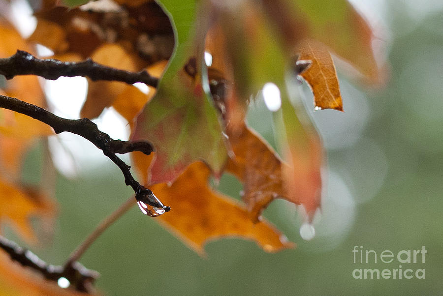 Raindrops Photograph - Tiny Leaf by Barbara Shallue
