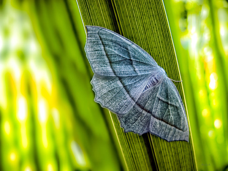 Butterfly Photograph - Tiny Moth On A Blade Of Grass by Bob Orsillo