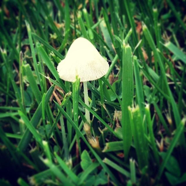 Mushroom Photograph - Tiny Mushroom In Grass #mushroom #grass by Marianna Mills