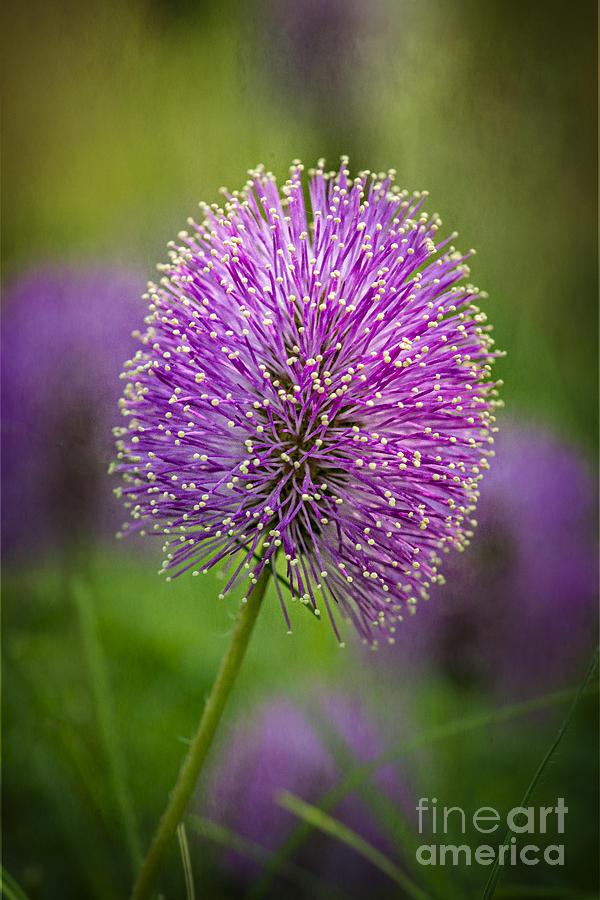 Wildflower Photograph - Tiny Purple Wildflower II by Tamyra Ayles