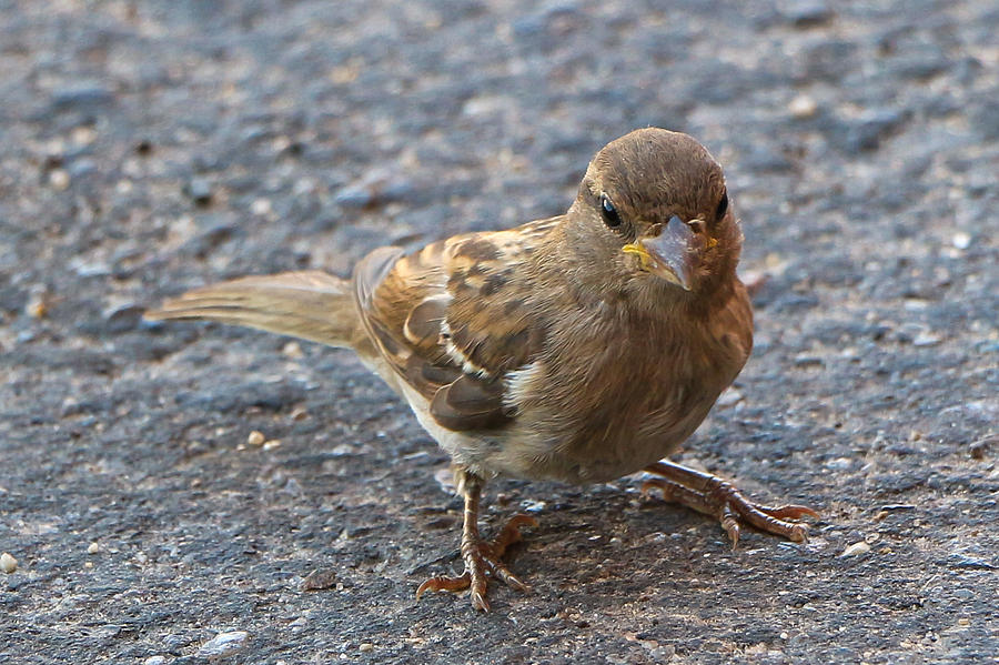Bird Photograph - Tiny by Robert Bascelli