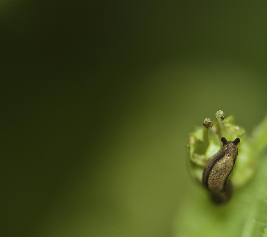 Animal Photograph - Tiny Slug by Sarah Crites