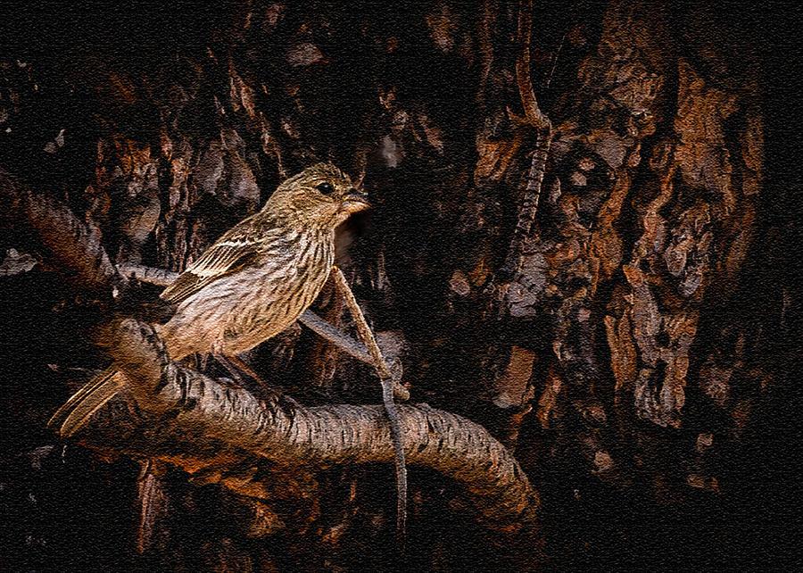 American Tree Sparrow Photograph - Tiny Sparrow Huge Tree by Bob and Nadine Johnston