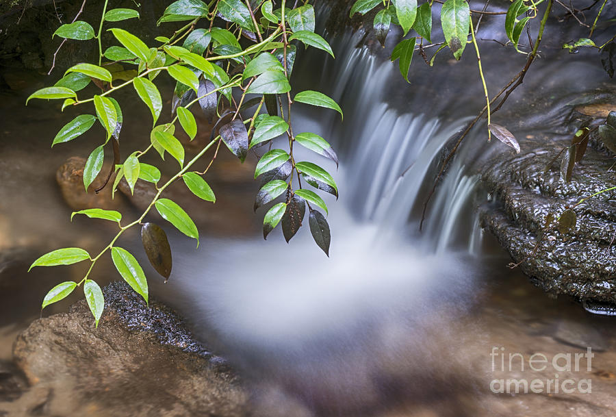 Tiny Waterfall by Louise St Romain