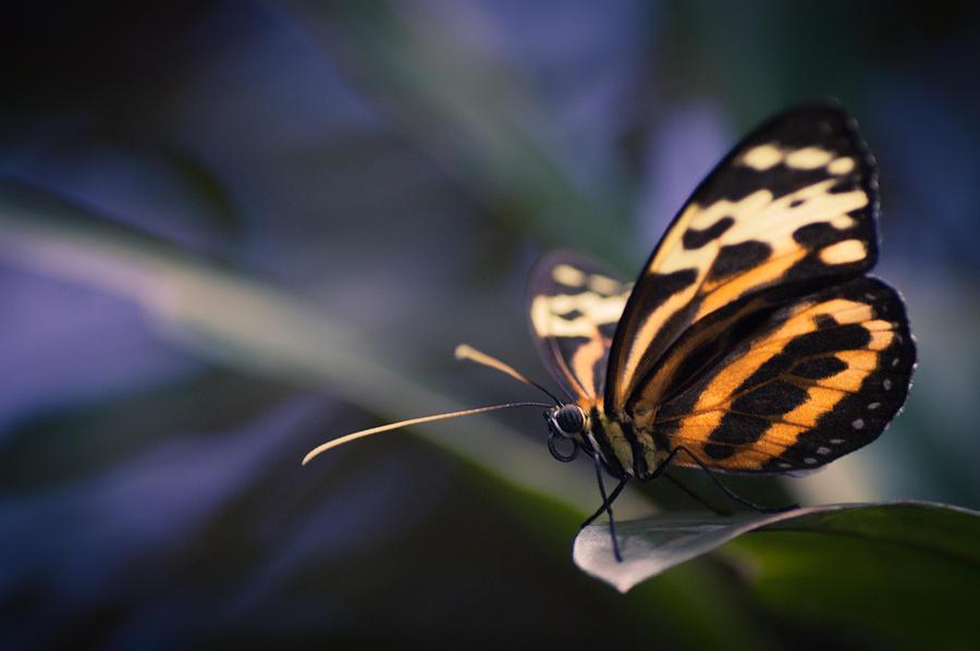 Tip Toe Tiger by Jen Baptist