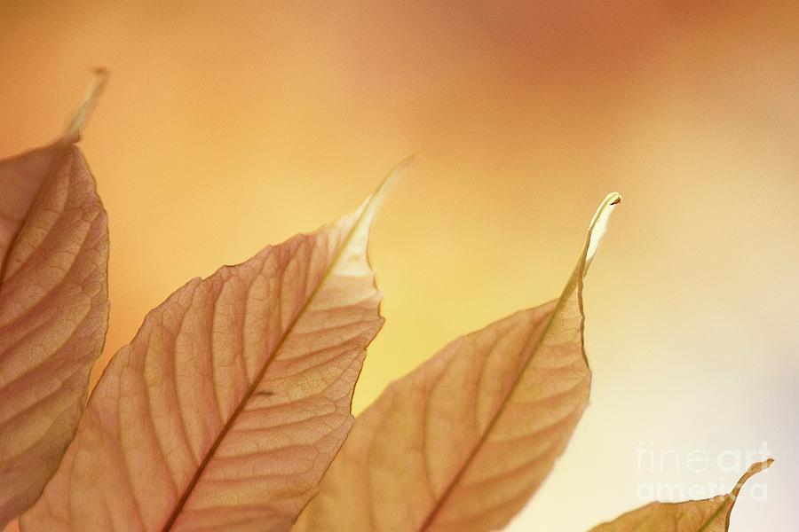 Leaves Photograph - Tips by Andrew Brooks