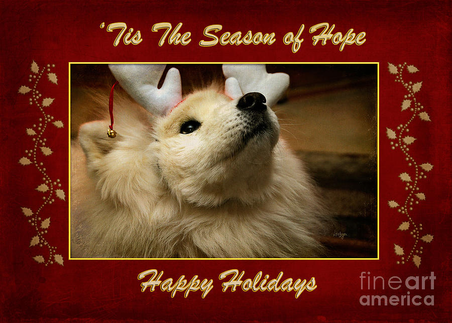 Hope Photograph - tis The Season Of Hope Happy Holidays by Lois Bryan