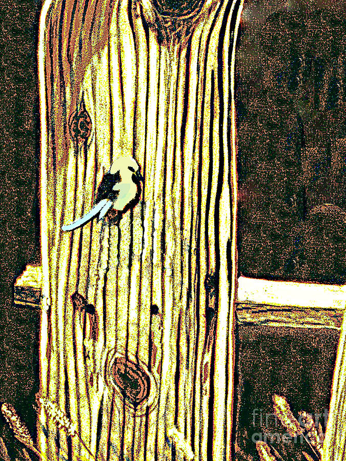 Titmouse On The  Fence Photograph